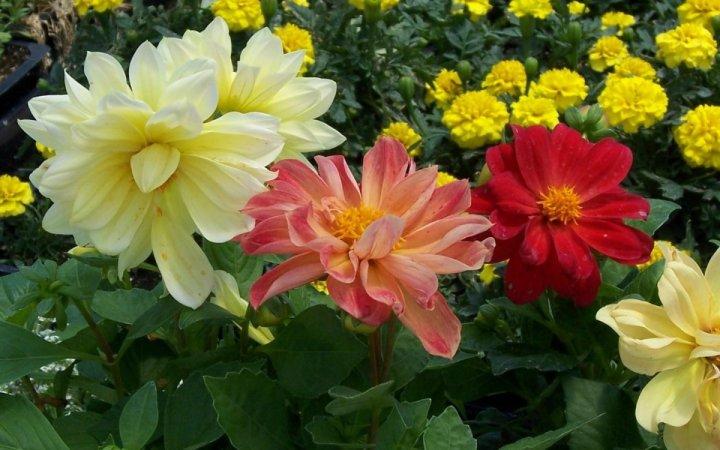 цветы, большие фото (13)