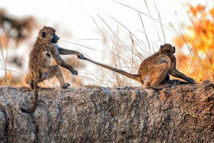 животные, прикольные фото животных (31)