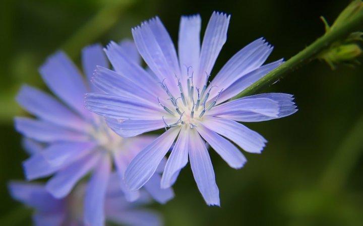 цветы, большие фото (16)