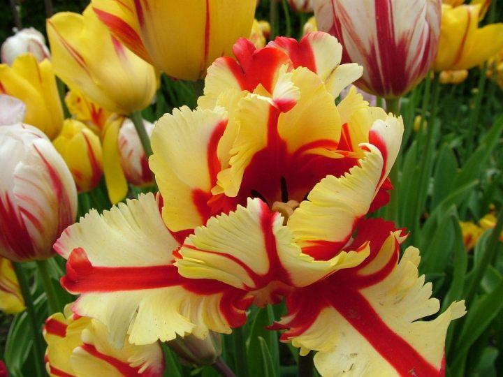 цветы, большие фото (20)