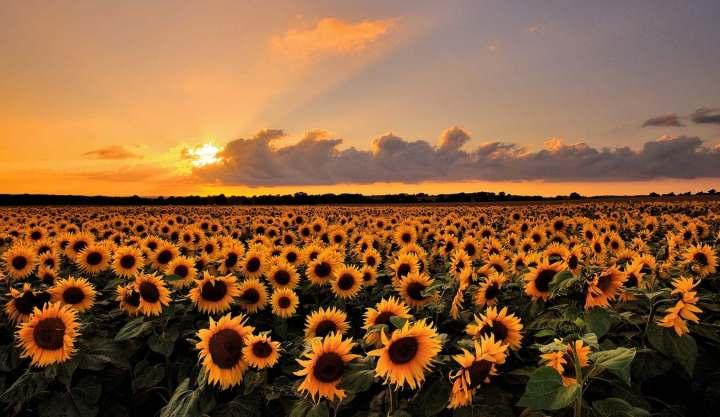 природа, красивые фото природы, фотопейзажи (14)