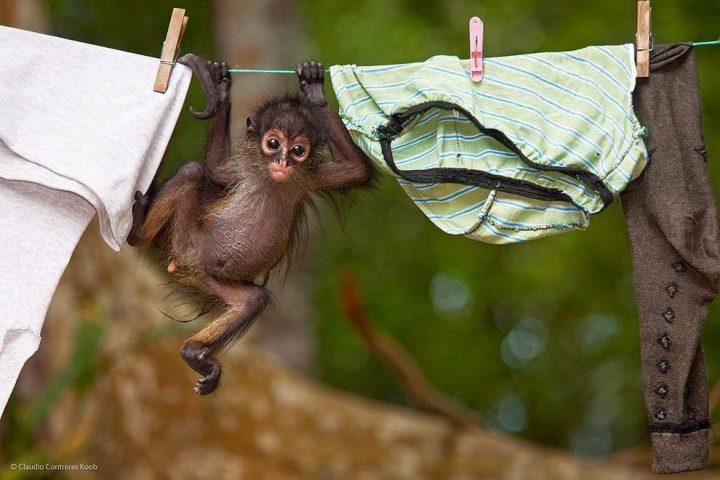 животные, прикольные фото животных (10)