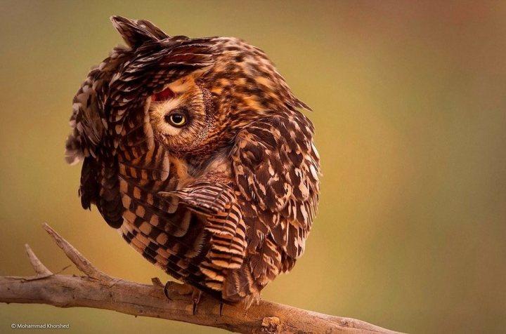животные, прикольные фото животных (8)