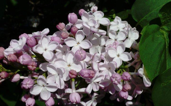 цветы, большие фото (11)