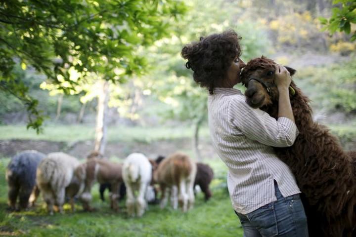фото, животные (6)