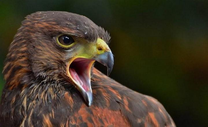 птицы, фото (6)