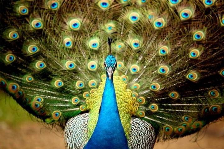 птицы, фото (7)