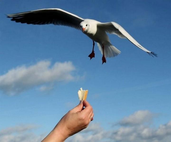 птицы, фото (2)