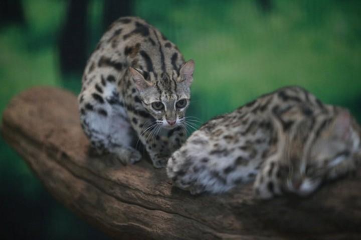 фото, животные (4)