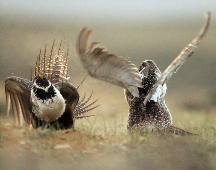 птицы, фото (8)