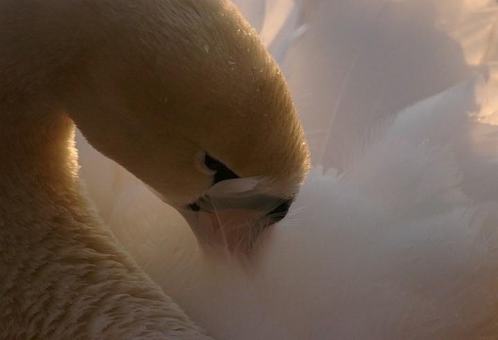 птицы, фото (16)