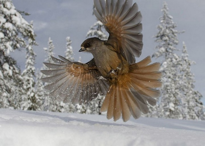 птицы, фото (17)