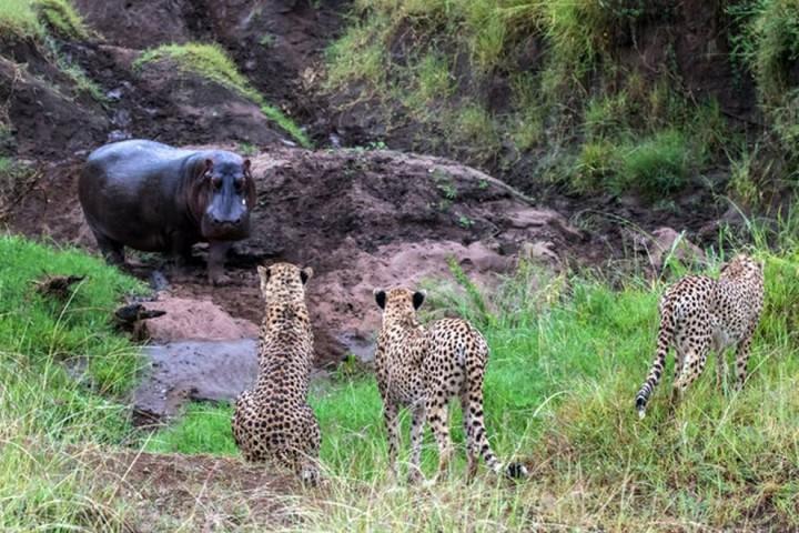 Красивые фото животных (13)
