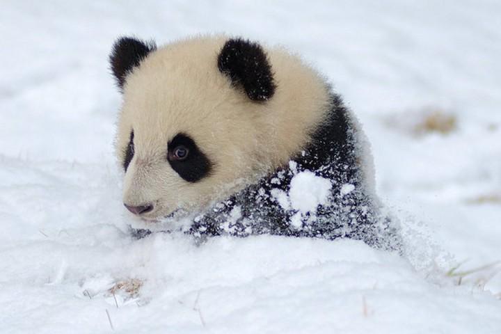 Красивые фото животных (3)