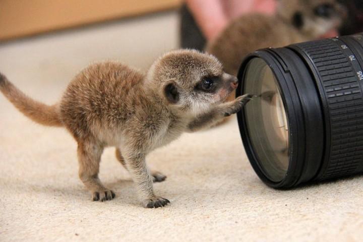Красивые фото животных (12)