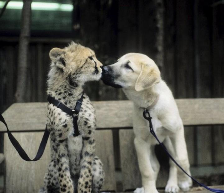 Красивые фото животных (25)