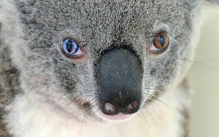 Красивые фото животных (19)