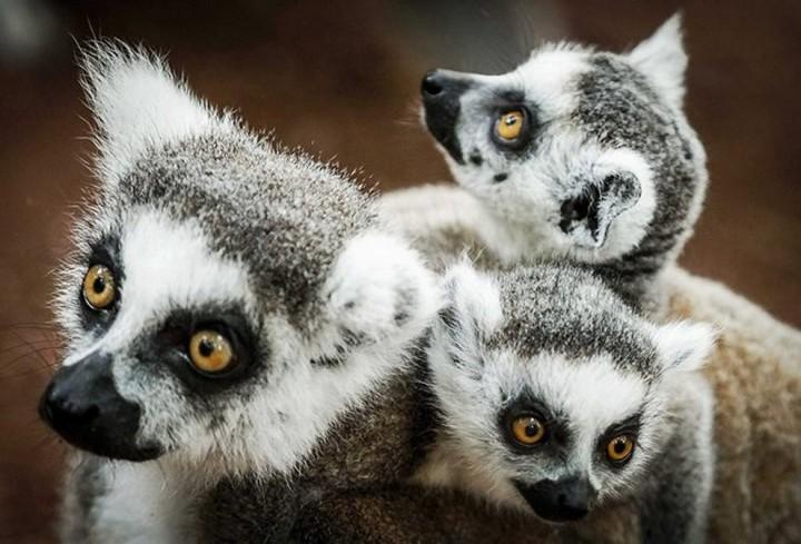 Красивые фото животных (9)