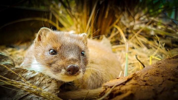 Красивые фото животных (5)