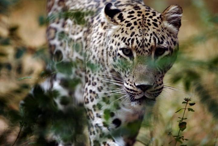 Красивые фото животных (8)