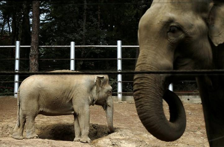 Красивые фото животных (7)