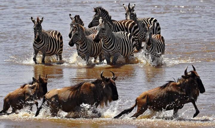 Красивые фото животных (2)