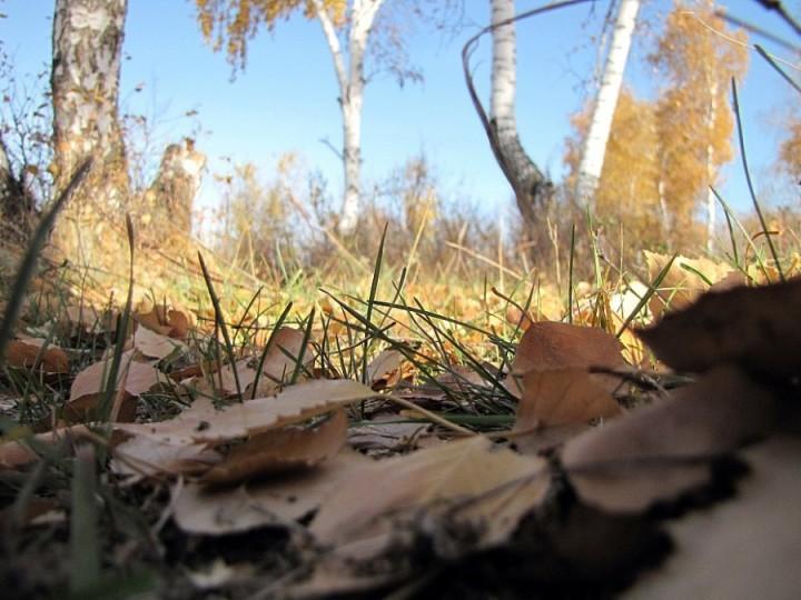 природа, красивые фото природы, фотопейзажи, осень (13)