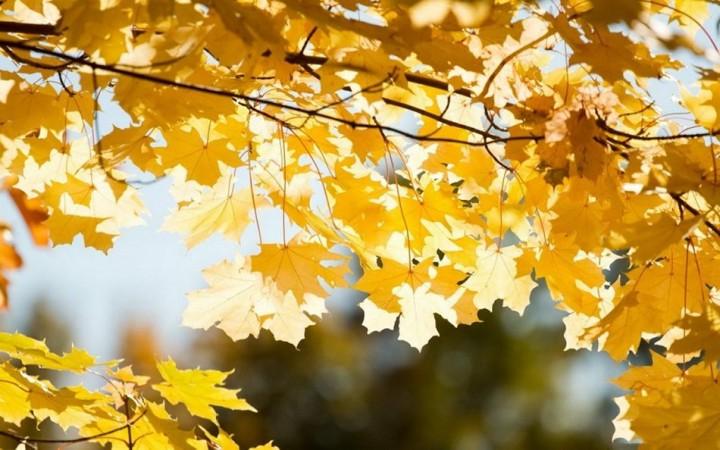 природа, красивые фото природы, фотопейзажи, осень (10)