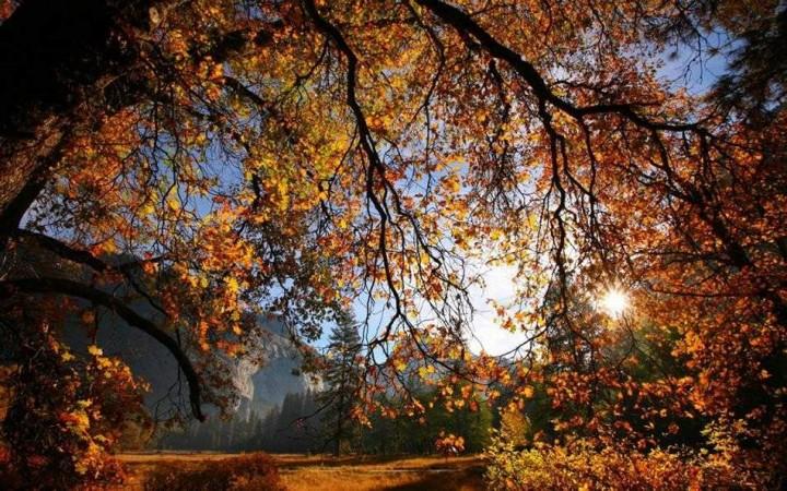 природа, красивые фото природы, фотопейзажи, осень (8)