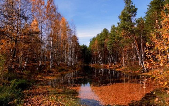 природа, красивые фото природы, фотопейзажи, осень (23)
