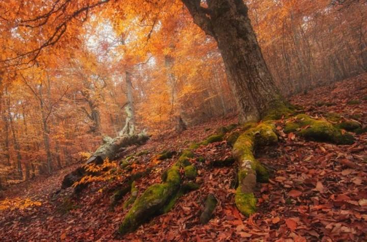 природа, красивые фото природы, фотопейзажи, осень (21)