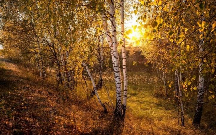 природа, красивые фото природы, фотопейзажи, осень (20)