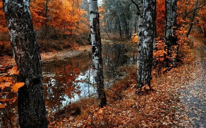 природа, красивые фото природы, фотопейзажи, осень (18)