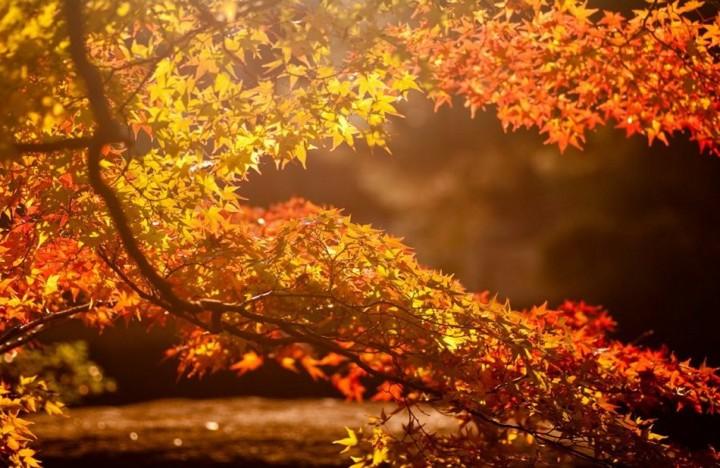 природа, красивые фото природы, фотопейзажи, осень (16)