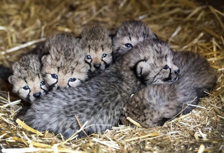 Фото, животные, Красивые фото животных (10)