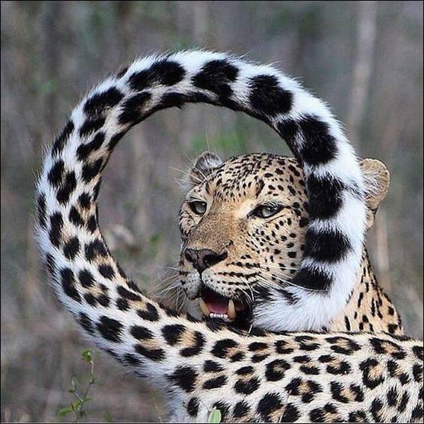 Фото, животные, Красивые фото животных (17)