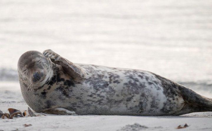 Фото, животные, красивые фото животных (6)