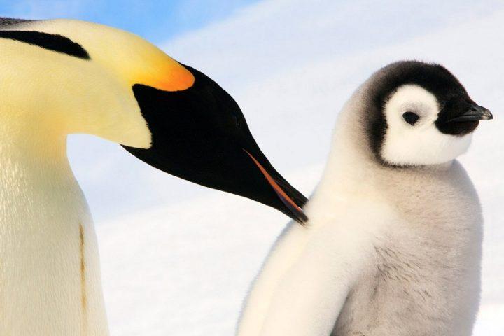 Фото, животные, красивые фото животных (2)