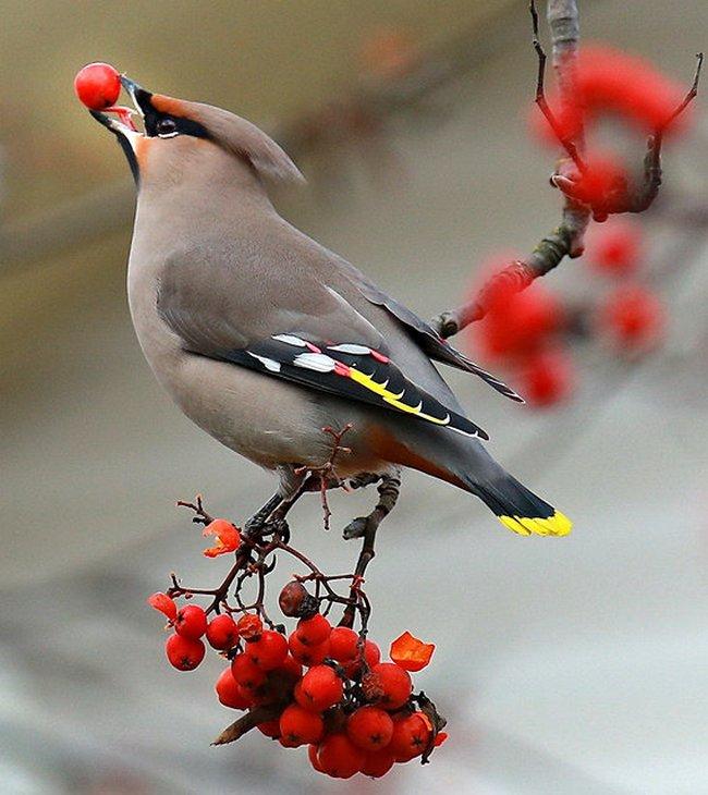 птицы (19)