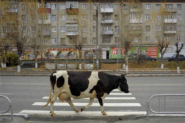 фото, Россия (13)