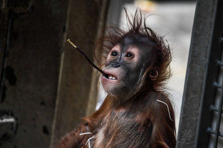 Фото, животные, Красивые фото животных (13)