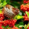 Фото красивых птиц. (30 фото)