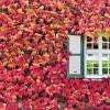 Фото. Осенняя пора. (16 фото)