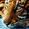 Фото. В мире животных. (23 фото)
