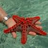 Фото. Морские звёзды. (19 фото)