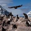 Фото. Суровая жизнь в Антарктике. (16 фото)