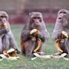 Прикольные фото животных от Алекс Тиш. ( 19 фото )