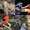 Прикольные фото «Олимпиада с животными» (30 фото)