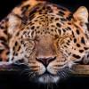 Прикольные фото животных. Сони. (18 фото)