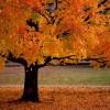 Красивые фото природы. Золотая осень. (20 фото)